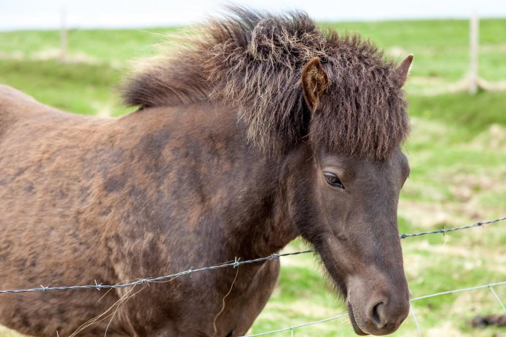 20150616-Paard